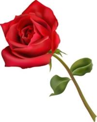 """Képtalálat a következőre: """"rózsa"""""""